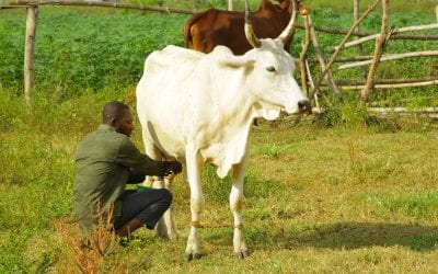 FrieslandCampina WAMCO's Dairy Development Program